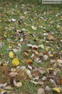 Листья в траве
