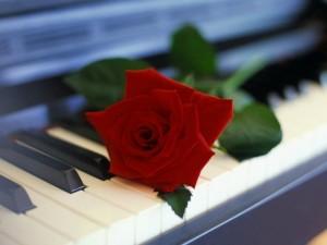 Цветы на пианино